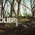 Colibrí - Colibrí